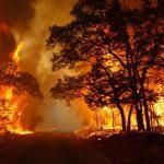 Un incendie dévore 5 hectares à Ain Drahem