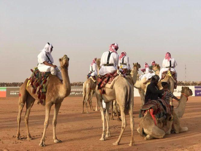 Les Saoudiens injectent du botox à leurs chameaux — Insolite