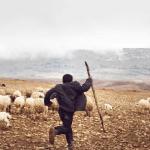 Kasserine : la famille du berger blessé par une mine bloque la route