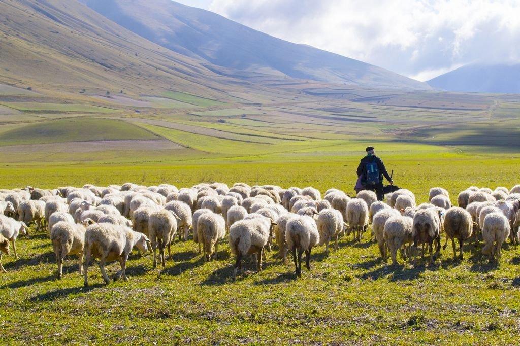 mouton-berger.jpg